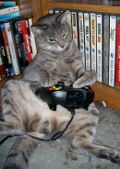 fig:recommended:xbox_cat.jpg